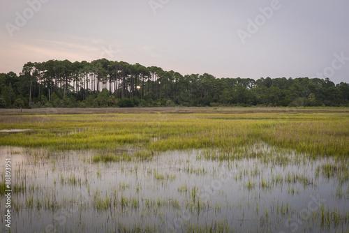 Fotografie, Obraz  Marsh area in South Carolina