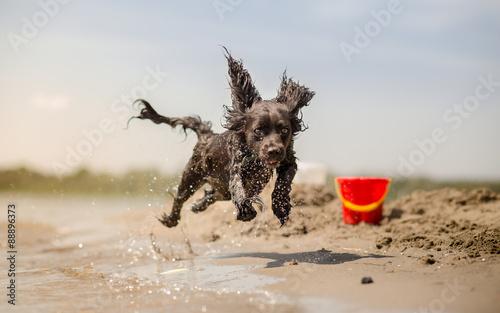 Valokuva Dog running on the beach