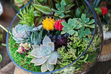 Terrarium With Cactus Succulen...
