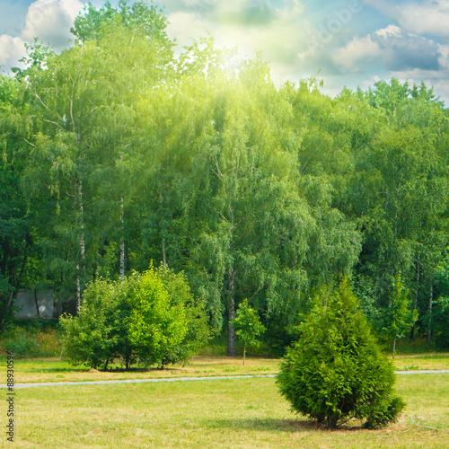 Printed kitchen splashbacks Khaki Green park with trees and grass