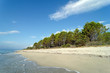 canvas print picture forêt de Pinia et littoral de Costa serena