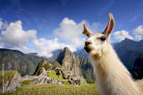Photo sur Toile Lama Llama in Machu Picchu, Peru