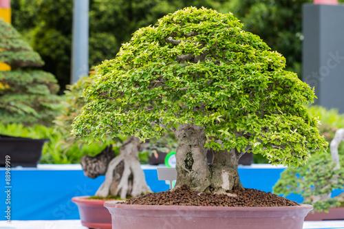 Fotobehang Bonsai small tree