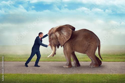 Fotografie, Obraz  Obchodní výzva slon překážka