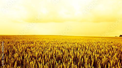 Photo Champ de blé