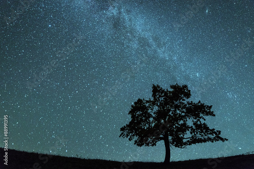 Photo sur Aluminium Nuit tree