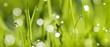 Green Wet Grass Panorama