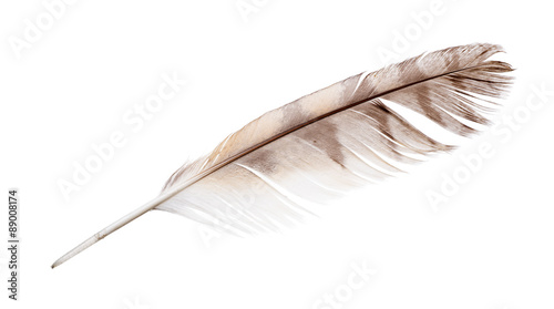 isolated on white variegated falcon feather