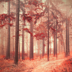 FototapetaFantasy red color saturated and foggy forest landscape. Picture was taken in south east Slovenia, Europe.