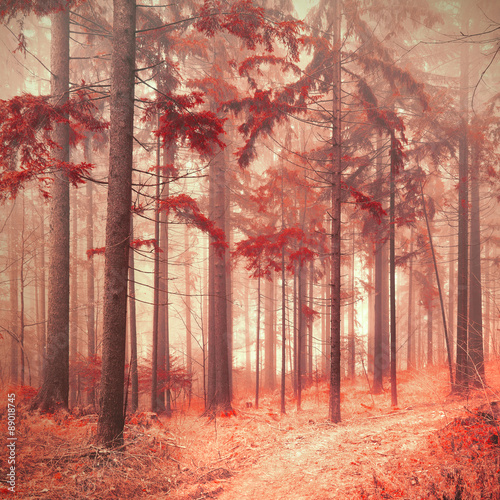 Fantasy red color saturated and foggy forest landscape. Picture was taken in south east Slovenia, Europe.