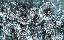 White Dandelions On A Dark-blu...