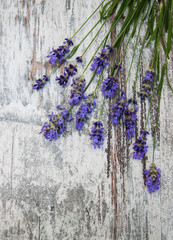 Fototapeta Lawenda lavender flowers