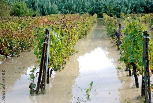 alluvione,campi e vigne allagati Canvas Print