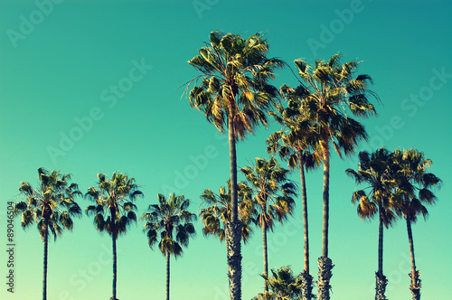 In de dag Los Angeles Palm trees at Santa Monica beach. Vintage post processed. Fashion, travel, summer, vacation and tropical beach concept.