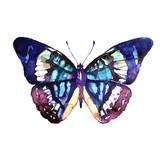 Fototapeta Motyle - butterflies design
