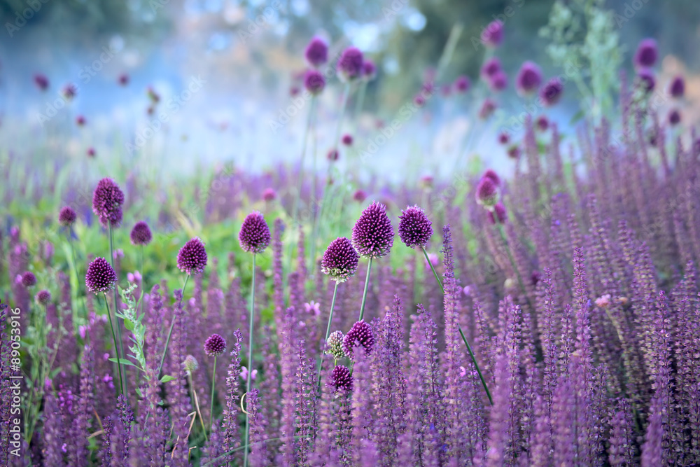 Fototapeta Chive herb flowers on beautiful blur background.