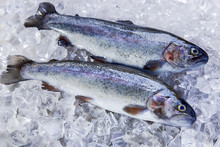 Whole Fresh Fish Trout On Ice