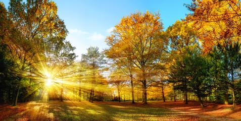 Obraz na PlexiIdyllischer Naturpark im Herbst bei Sonnenschein