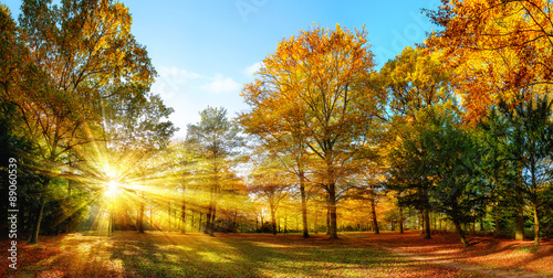 Fotomural  Idyllischer Naturpark im Herbst bei Sonnenschein