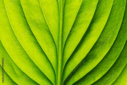 Obraz na płótnie green leaf