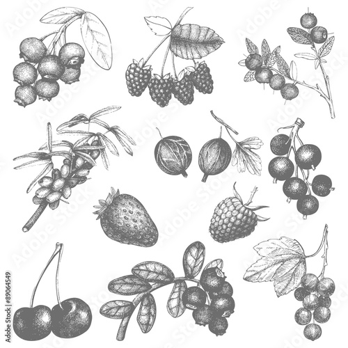 Fotografie, Obraz  Vintage fruit and berry illustration