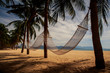 view of two hammocks across palm trees on sand beach