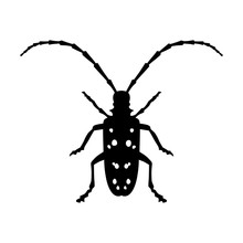 Asian Longhorned Beetle Insect...