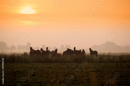 few horse silhouettes on pasture at sunrise