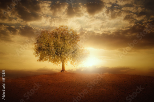 La pose en embrasure Marron Single Tree at sunset