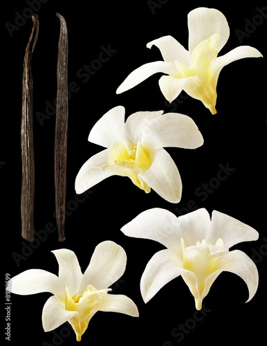how to stick fresh flowers on a wedding cake vanilla flowers aromatic fresh vanila flower and stick on 16183