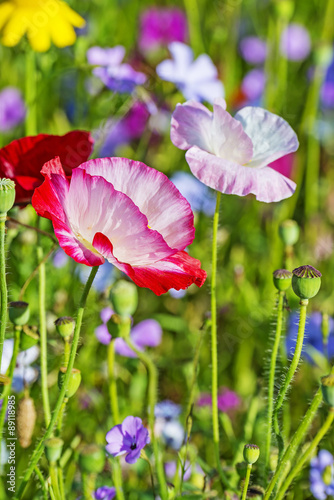 summer meadow with red poppies - 89118985