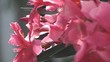 Rosebushes in garden
