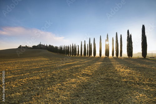 Valokuva  Cypress alley in Tuscany during sunrise