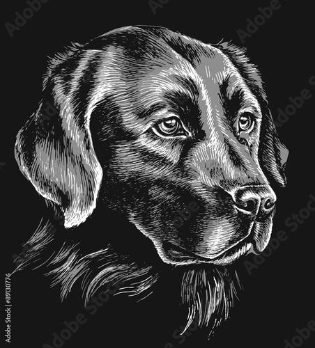 szkic-czarno-bialy-labrador