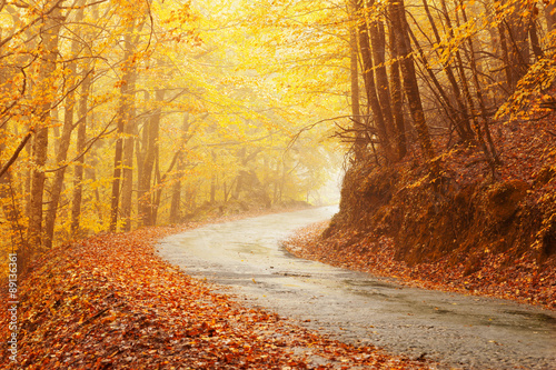 Foto op Canvas Herfst Autumn landscape with road and beautiful colored trees