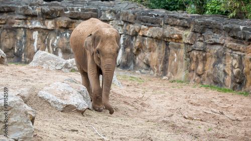 Aluminium Prints Elephant Elephant