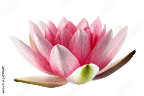 Poster de jardin Nénuphars Lotus or water lily isolated