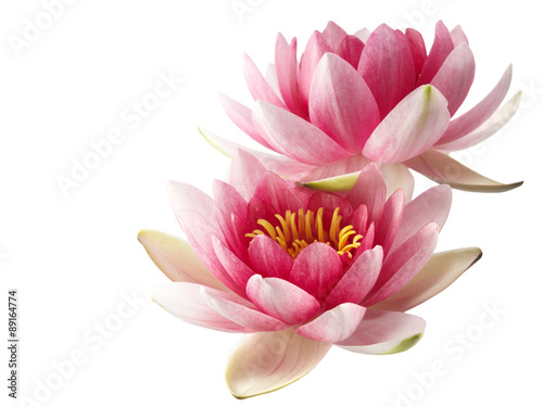 Photo Stands Water lilies Lotus or water lily isolated