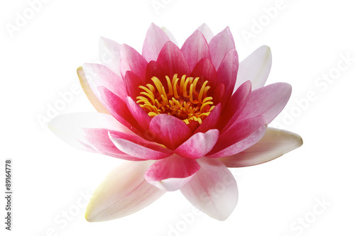 Foto op Canvas Lotusbloem Lotus or water lily isolated