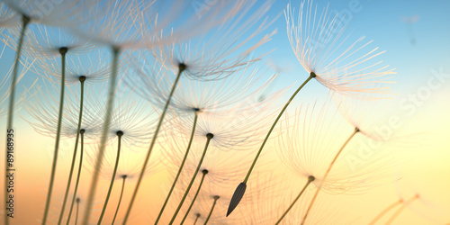Canvas Prints Dandelion Pusteblumen Closeup 2