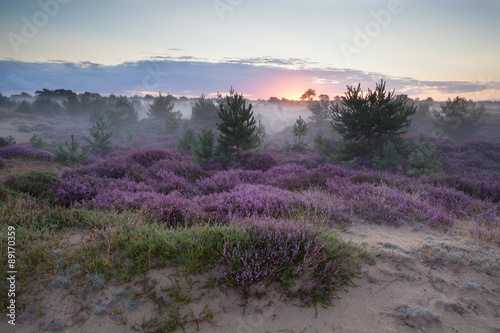 Tuinposter Purper misty sunrise on sand dunes with heather flowers