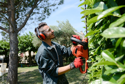 Photo sur Toile Noir handsome young man gardener trimming hedgerow in park outdoor