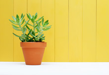 Green Plant On Yellow Wooden B...