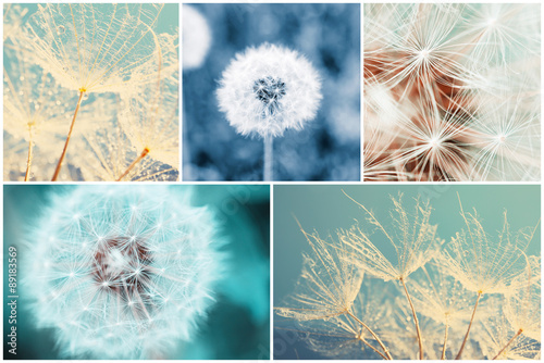 Beautiful nature collage with dandelion flowers - 89183569
