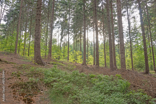 Canvas Prints Road in forest Blick in den Wald