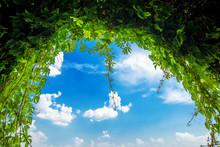 Green Garden Archway