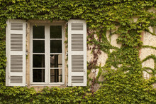 French Window With Ivy. Ivy Is Invading The Space Of This French Window.