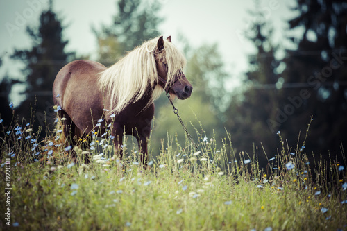 Obraz w ramie Horse, Suwalszczyzna, Poland