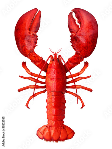Valokuva Lobster Isolated