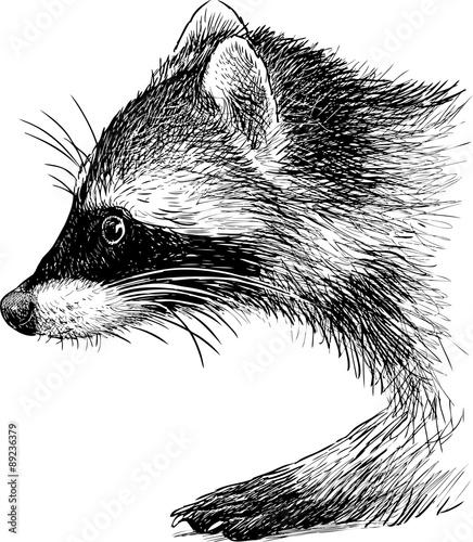 Fotografía raccoon